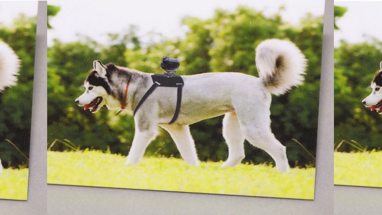 gopro-dog-action-cam